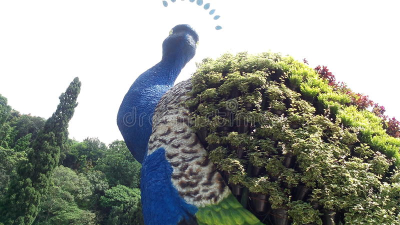 Γίγαντας peacock στοκ φωτογραφία με δικαίωμα ελεύθερης χρήσης