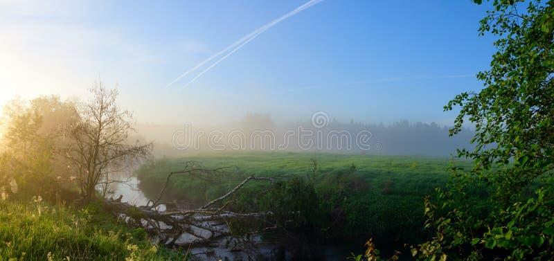 Γαλήνιο θερινό ομιχλώδες τοπίο με τα δέντρα που αυξάνονται στις όχθεις του ποταμού στην ανατολή στοκ φωτογραφία με δικαίωμα ελεύθερης χρήσης