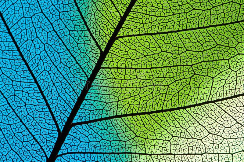 γαλαζοπράσινη δομή φύλλω&n στοκ εικόνες