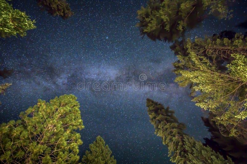 Γαλακτώδης γαλαξίας τρόπων και έναστρος νυχτερινός ουρανός με τα πράσινα δέντρα στοκ φωτογραφίες