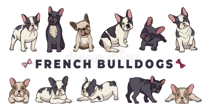Γαλλικά μπουλντόγκ Σύνολο Vector bulldog Αστείο κουτάβι κινούμενων σχεδίων απομονωμένο σε λευκό φόντο διανυσματική απεικόνιση