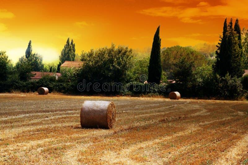 γαλλικό άχυρο πεδίων στοκ φωτογραφία με δικαίωμα ελεύθερης χρήσης