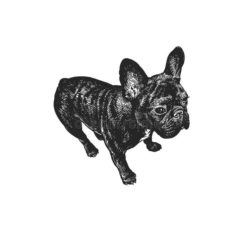 Γαλλικό σκυλί μπουλντόγκ χαριτωμένο κουτάβι Γραπτό σχέδιο χεριών διανυσματική απεικόνιση
