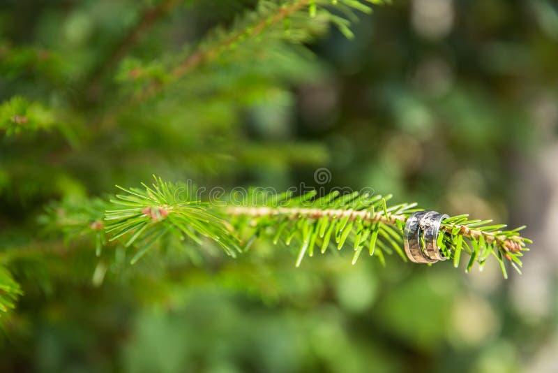 Γαμήλια δαχτυλίδια στον κλάδο δέντρων πεύκων στον αγροτικό γάμο στοκ εικόνες με δικαίωμα ελεύθερης χρήσης