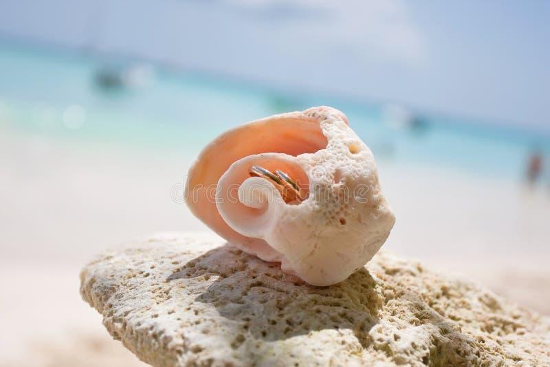 Γαμήλια δαχτυλίδια σε ένα κοχύλι στοκ εικόνες με δικαίωμα ελεύθερης χρήσης