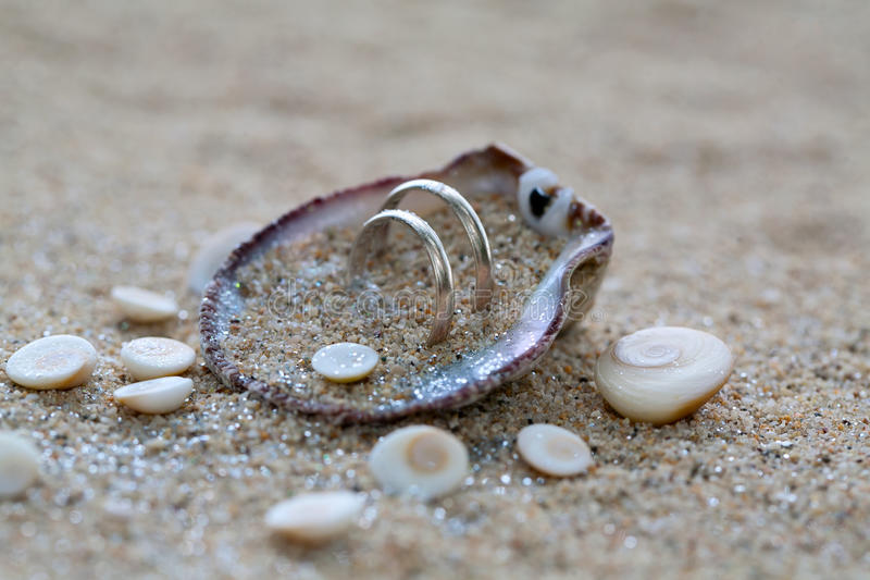 Γαμήλια δαχτυλίδια στο κοχύλι θάλασσας στην παραλία κοραλλιών στοκ φωτογραφία με δικαίωμα ελεύθερης χρήσης