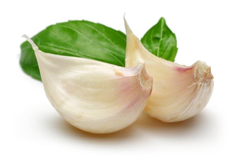 Γαρίφαλο σκόρδου με το φύλλο βασιλικού που απομονώνεται στο λευκό στοκ φωτογραφία με δικαίωμα ελεύθερης χρήσης