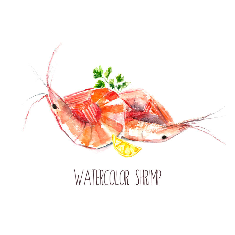 Γαρίδες Watercolor ελεύθερη απεικόνιση δικαιώματος