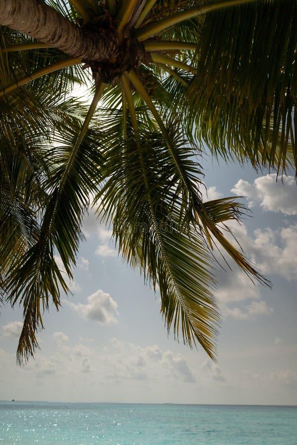 Γαρμένος φοίνικας καρύδων που απομονώνεται στον ουρανό και το ωκεάνιο υπόβαθρο στοκ εικόνες