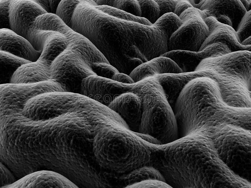 γαστρικό mucosa απεικόνιση αποθεμάτων