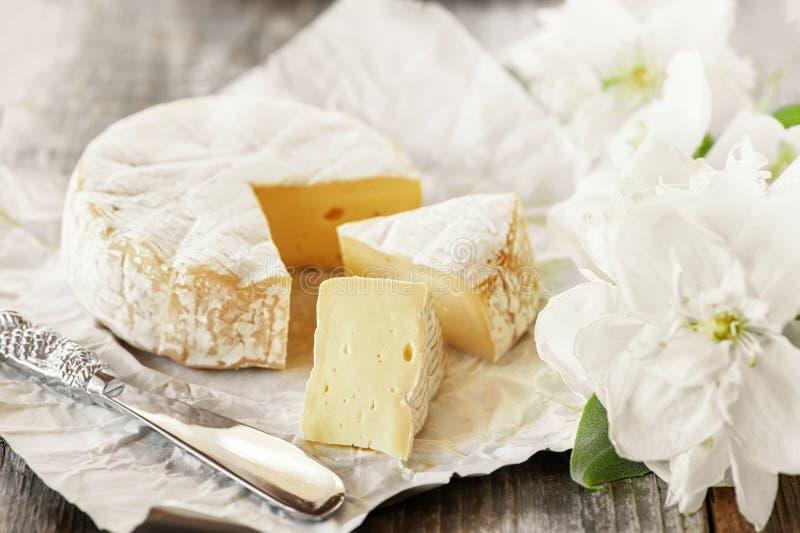 Γαστρονομικό πικάντικο Camembert τυρί, brie στο υπόβαθρο της Λευκής Βίβλου με το μαχαίρι τυριών Πικάντικο ορεκτικό για τα gourmet στοκ φωτογραφίες με δικαίωμα ελεύθερης χρήσης