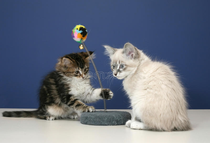 γατάκια εύθυμα στοκ εικόνα με δικαίωμα ελεύθερης χρήσης