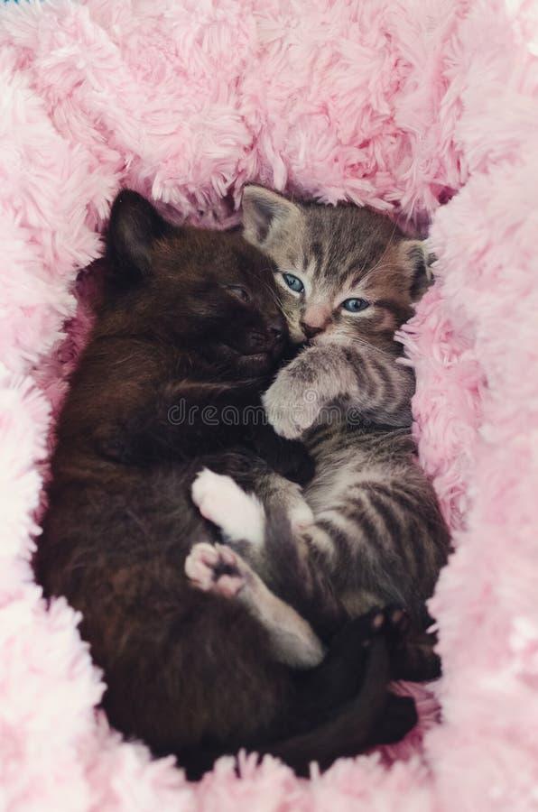 Γατάκια που βρίσκονται στο ρόδινο κρεβάτι στοκ εικόνες
