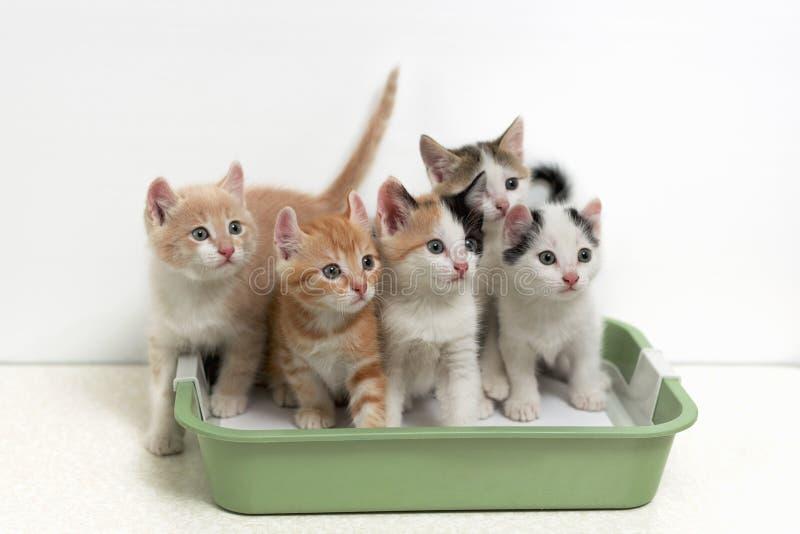 Γατάκια που κάθονται στην τουαλέτα γατών στοκ φωτογραφίες με δικαίωμα ελεύθερης χρήσης