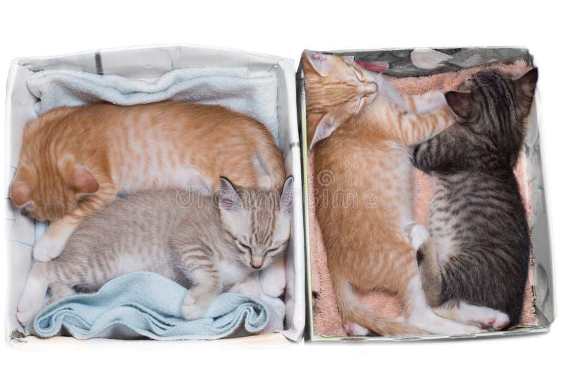 Γατάκια που κοιμούνται στα κιβώτια στοκ φωτογραφία με δικαίωμα ελεύθερης χρήσης