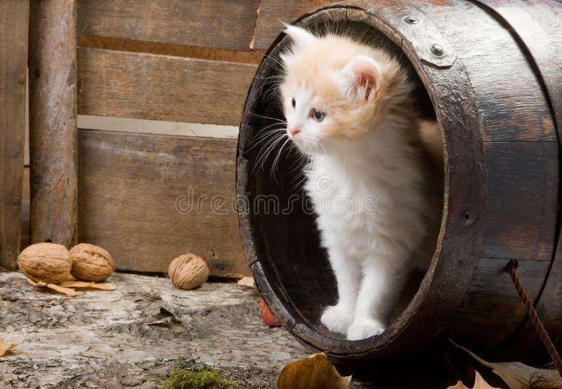 γατάκι βαρελιών στοκ φωτογραφία με δικαίωμα ελεύθερης χρήσης