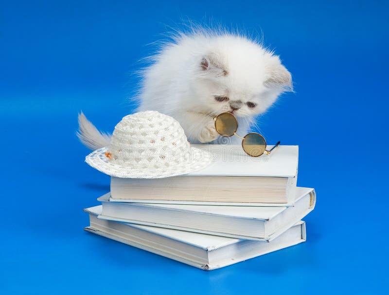 γατάκι γυαλιών βιβλίων στοκ εικόνα με δικαίωμα ελεύθερης χρήσης