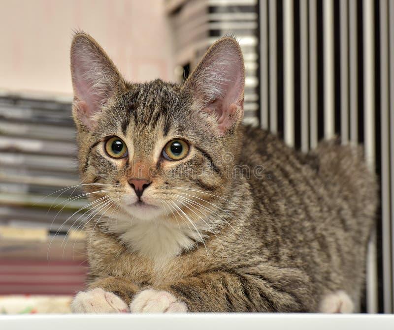 Γατάκι εφήβων 3 μήνες στοκ εικόνα με δικαίωμα ελεύθερης χρήσης