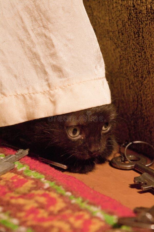 Γατάκι και κλειδιά στοκ φωτογραφία με δικαίωμα ελεύθερης χρήσης