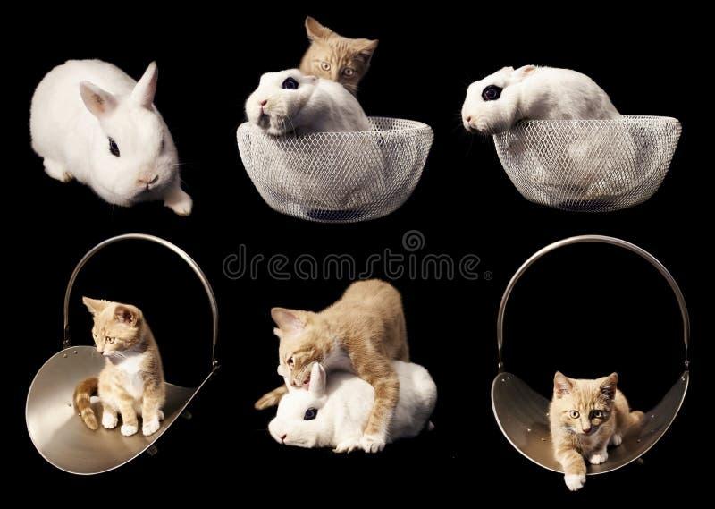 Γατάκι και Buny στο μαύρο κολάζ υποβάθρου στοκ φωτογραφίες με δικαίωμα ελεύθερης χρήσης