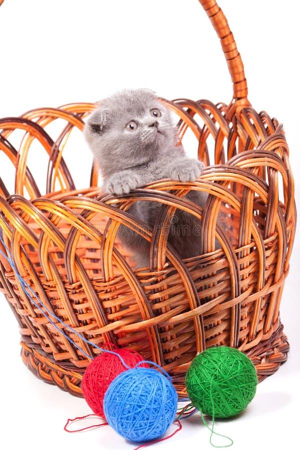 γατάκι καλαθιών λίγα στοκ εικόνα