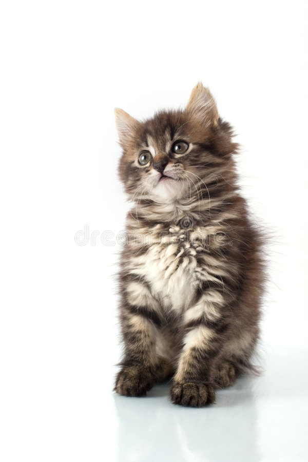 γατάκι λίγα εύθυμα στοκ φωτογραφία με δικαίωμα ελεύθερης χρήσης