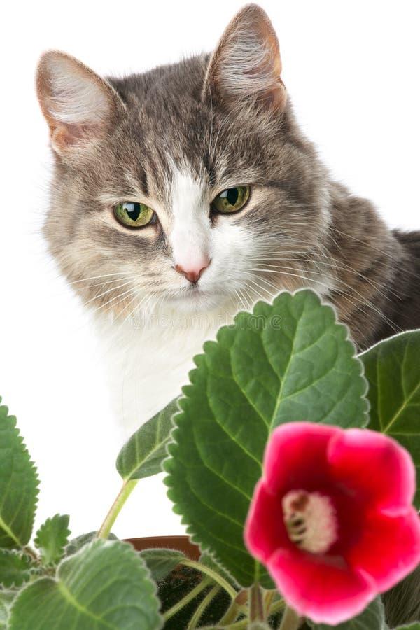 γατάκι λουλουδιών στοκ φωτογραφία με δικαίωμα ελεύθερης χρήσης