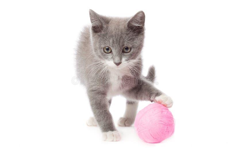 Γατάκι με μια σφαίρα του νήματος στοκ εικόνες