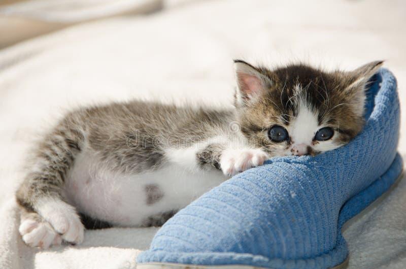 Γατάκι με την μπλε παντόφλα στοκ εικόνες