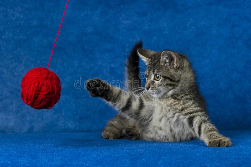 Γατάκι με τη σφαίρα νημάτων στοκ φωτογραφίες