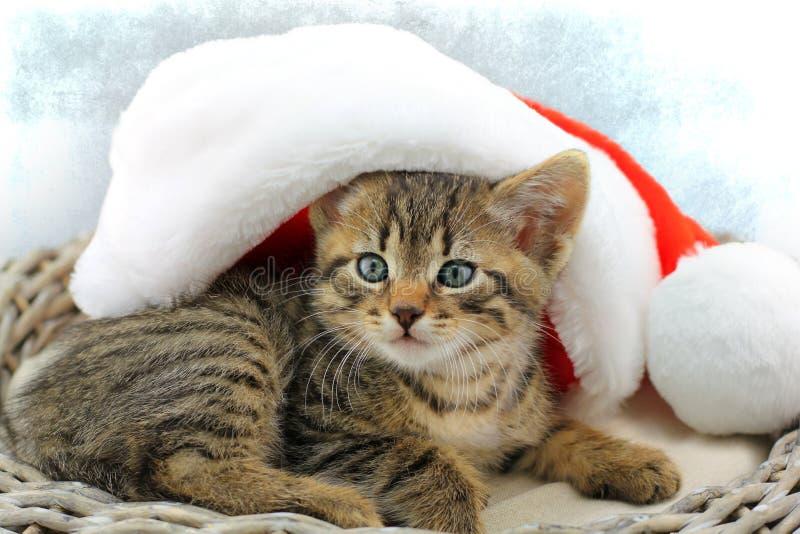 Γατάκι με το καπέλο Άγιου Βασίλη στοκ εικόνα με δικαίωμα ελεύθερης χρήσης