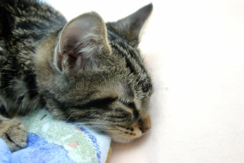 Download γατάκι νυσταλέο στοκ εικόνα. εικόνα από σπίτι, ονειροπόλος - 381679