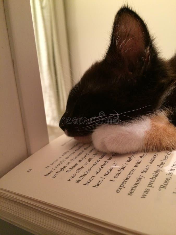 γατάκι νυσταλέο στοκ φωτογραφίες
