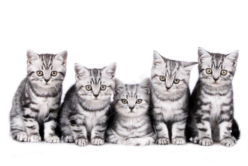 Γατάκι πέντε που απομονώνεται στοκ φωτογραφία με δικαίωμα ελεύθερης χρήσης