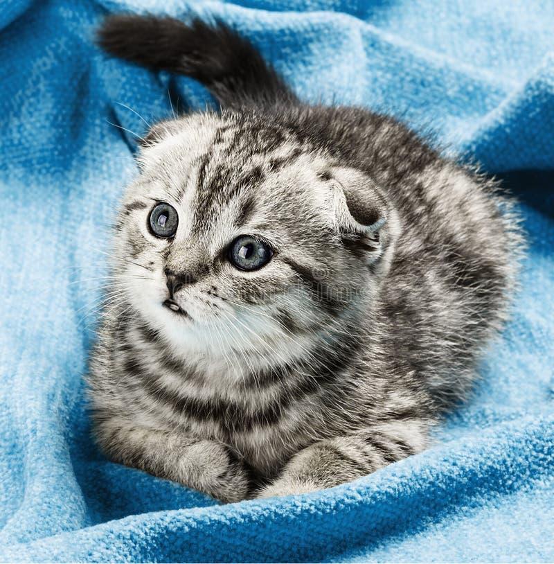 Γατάκι που βρίσκεται στο κρεβάτι στοκ φωτογραφία