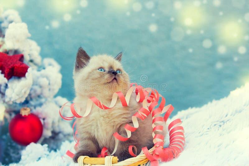 Γατάκι που μπλέκεται στην ταινία Χριστουγέννων στοκ φωτογραφία με δικαίωμα ελεύθερης χρήσης