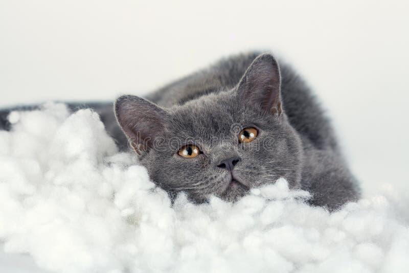 Γατάκι που ονειρεύεται στο άσπρο κάλυμμα στοκ εικόνες με δικαίωμα ελεύθερης χρήσης