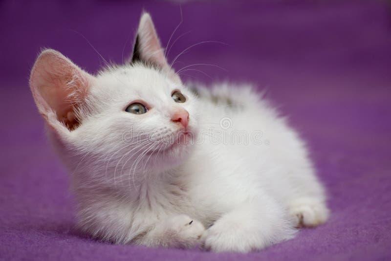 γατάκι που φαίνεται άσπρο στοκ φωτογραφία με δικαίωμα ελεύθερης χρήσης