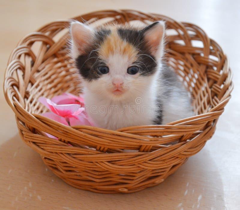 Γατάκι σε ένα καλάθι στοκ φωτογραφίες