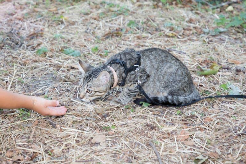 Γατάκι σε ένα λουρί με το χέρι ενός κοριτσιού στοκ φωτογραφίες