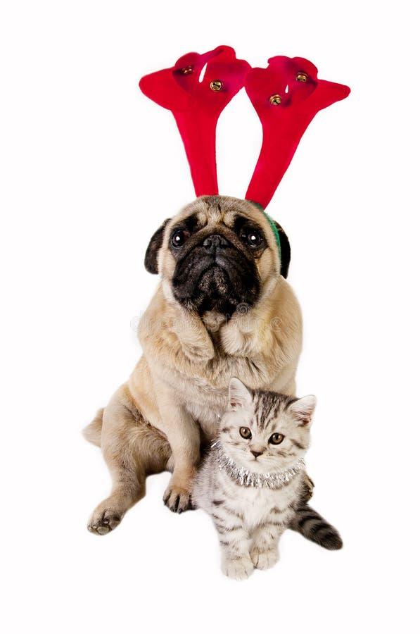 γατάκι σκυλιών Χριστουγ στοκ φωτογραφίες με δικαίωμα ελεύθερης χρήσης