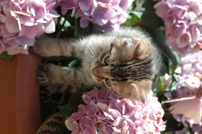 Γατάκι στα λουλούδια στοκ εικόνες με δικαίωμα ελεύθερης χρήσης