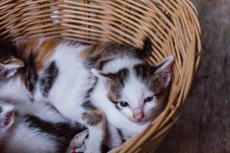 Γατάκι στο καλάθι στοκ εικόνα
