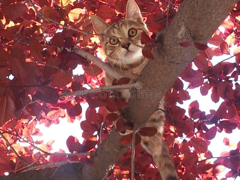 Γατάκι στο κόκκινο δέντρο στοκ εικόνα με δικαίωμα ελεύθερης χρήσης