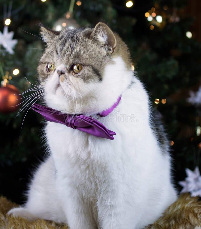 Γατάκι Χριστουγέννων στοκ φωτογραφίες