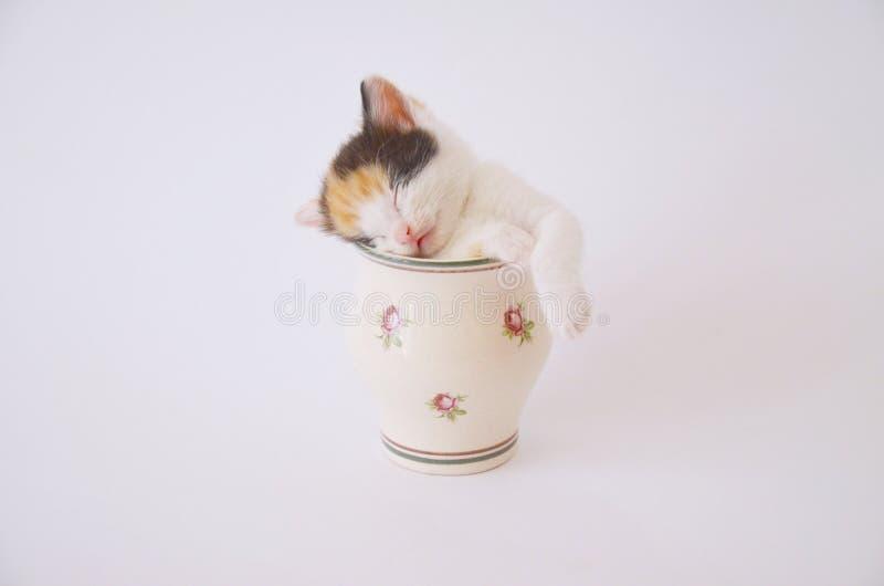 Γατάκι ύπνου στο φλυτζάνι στοκ εικόνα