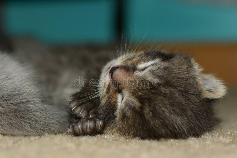 Γατάκι ύπνου στοκ εικόνα