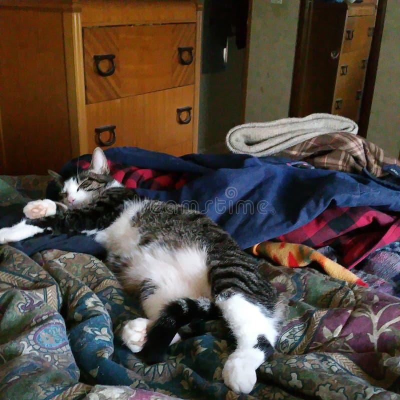 Γατάκι ύπνου Luvs στοκ φωτογραφίες