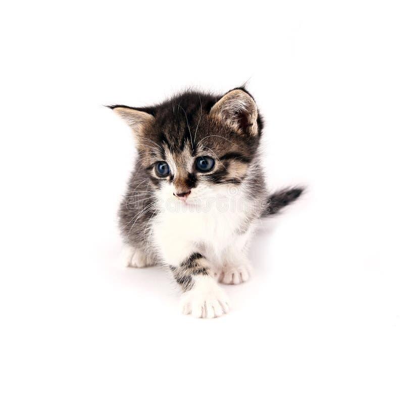 Γατάκι στοκ φωτογραφία