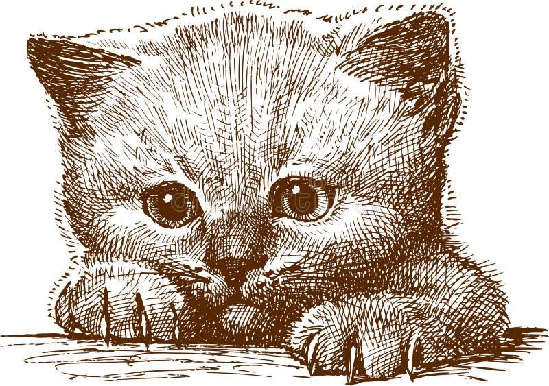 γατάκι διανυσματική απεικόνιση